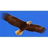 EAGLEWINGS MANPOWER EMPLOYMENT PTE. LTD.